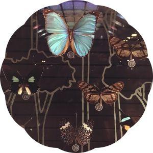 musee-de-lhistoire-naturelle-les-musees-de-paris-papillons